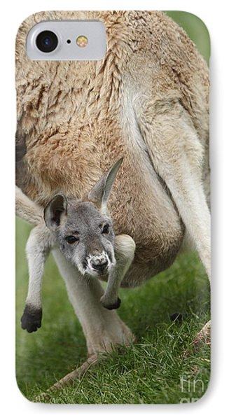 Red Kangaroo Joey IPhone Case by Craig Dingle