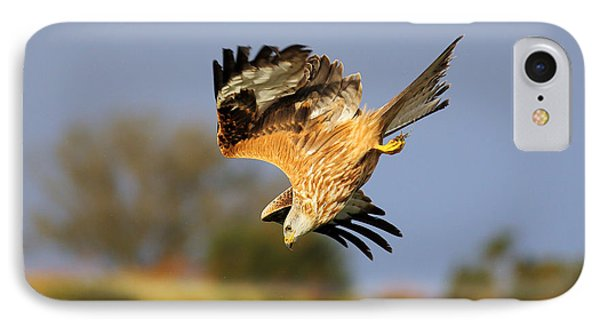 Red Kite Diving IPhone Case by Grant Glendinning