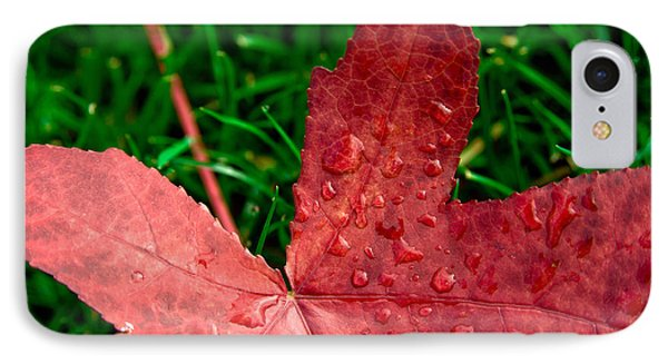 Red Leaf IPhone Case by Crystal Hoeveler