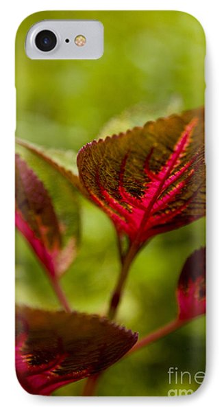 Red Leaf Phone Case by Thomas Levine