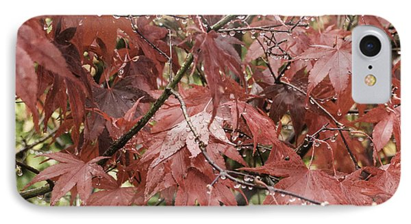 Red Leaves In Fall IPhone Case by Michael Canning