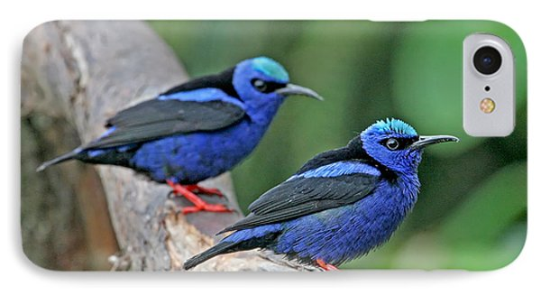 IPhone Case featuring the photograph Red-legged Honeycreepers by Peggy Collins