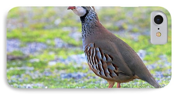Red-legged Partridge IPhone Case