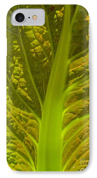Red Lettuce Veins IPhone Case by Kathryn Barry
