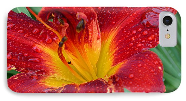 Red Lily After The Rain IPhone Case