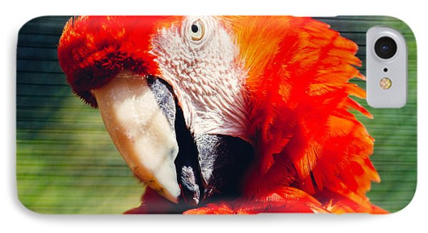 Red Macaw Closeup IPhone Case by Pati Photography