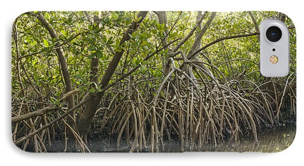 Red Mangrove Rhizophora Mangle IPhone Case