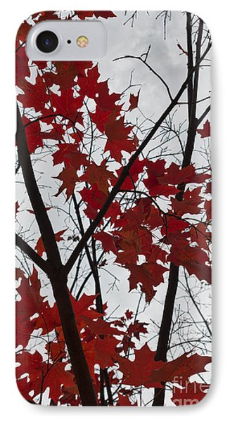 Red Maple Branches IPhone Case by Ana V Ramirez