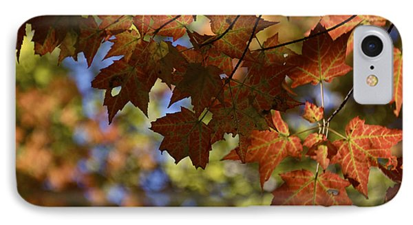 Red Maple Canopy IPhone Case