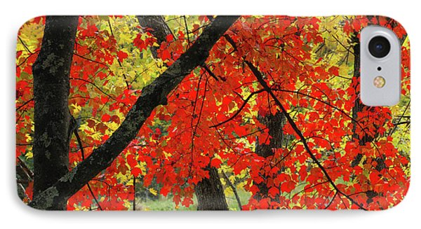 Red Maple Close-up, Sebago Lake State IPhone Case by Michel Hersen