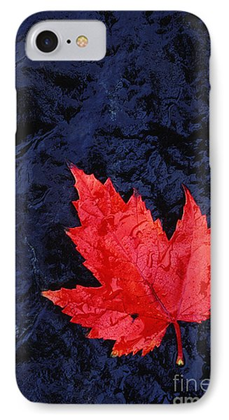 Red Maple Leaf And Black Stone - Fs000222 Phone Case by Daniel Dempster