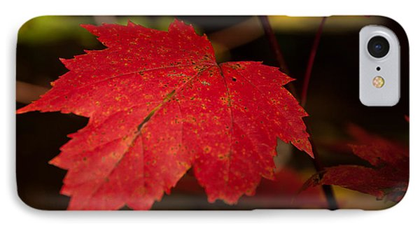 Red Maple Leaf In Fall IPhone Case by Brenda Jacobs