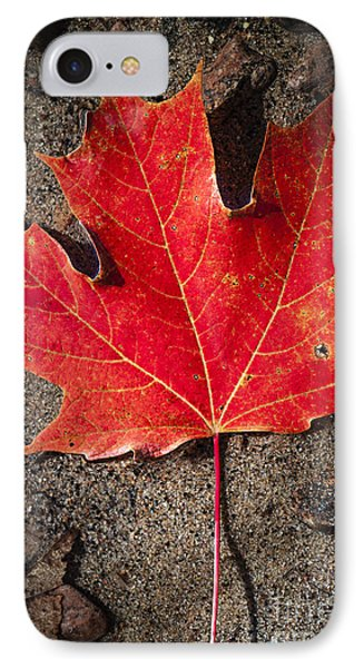 Red Maple Leaf In Water IPhone Case