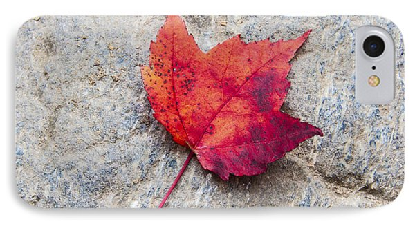 Red Maple Leaf On Granite Stone In A Square Format Phone Case by Karen Stephenson