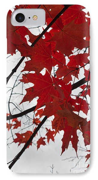 Red Maple Leaves IPhone Case by Ana V Ramirez