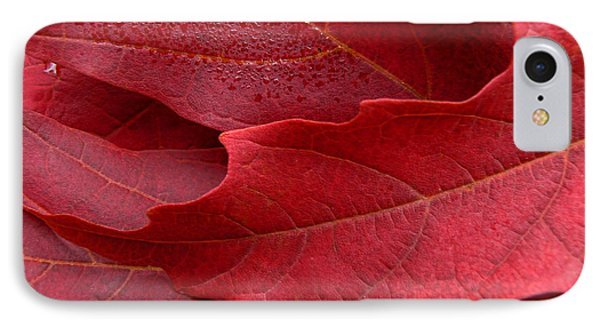 Red Maple Leaves Phone Case by Jennie Marie Schell