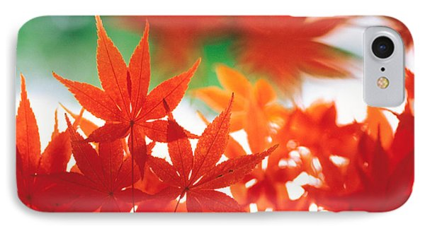 Red Maple Leaves IPhone Case by Panoramic Images