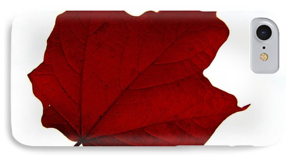 Red Maple Now Phone Case by Tina M Wenger