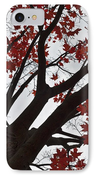 Red Maple Tree IPhone Case by Ana V Ramirez