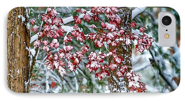 Red Maple With Snow IPhone Case