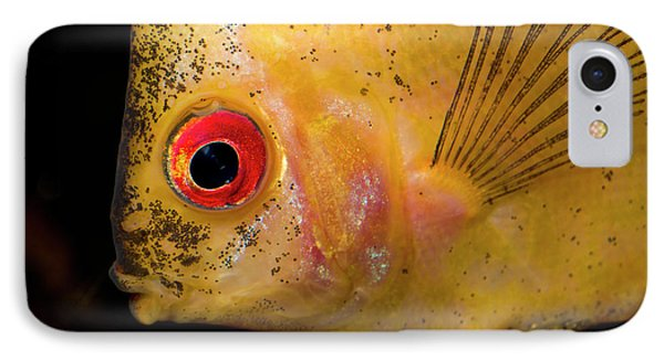 Red Melon Discus IPhone Case by Nigel Downer