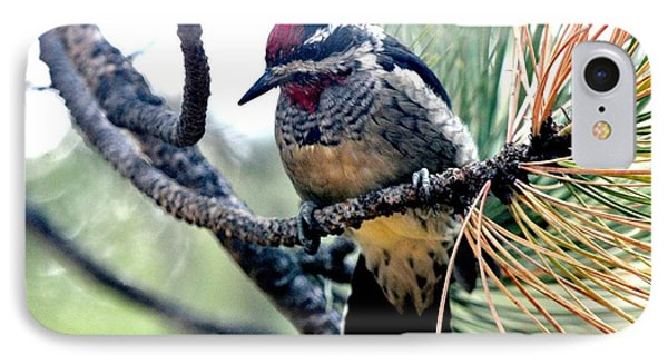 Red-naped Sapsucker On Pine Tree IPhone Case