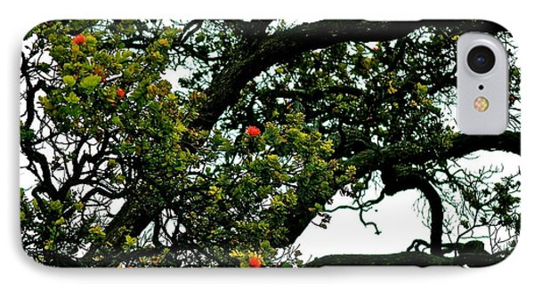 Red Ohia Lehua Tree IPhone Case by Lehua Pekelo-Stearns