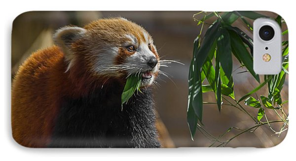 Red Panda Cafeteria IPhone Case by Chris Fletcher