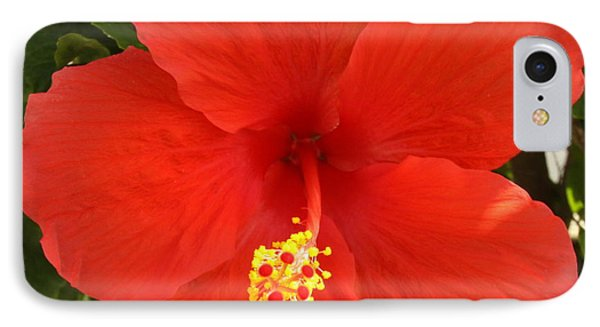 Red Pansy IPhone Case by Mustafa Abdullah