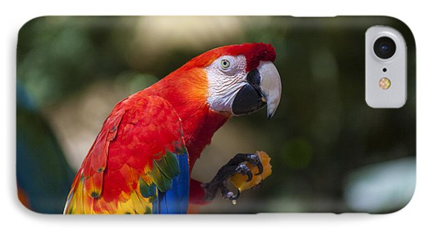 Red Parrot  IPhone 7 Case by Garry Gay