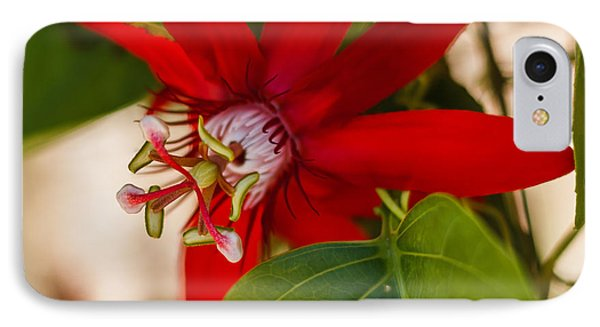 IPhone Case featuring the photograph Red Passion Flower by Jane Luxton