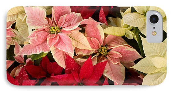 IPhone Case featuring the photograph Red Pink And White Poinsettias by Chris Scroggins