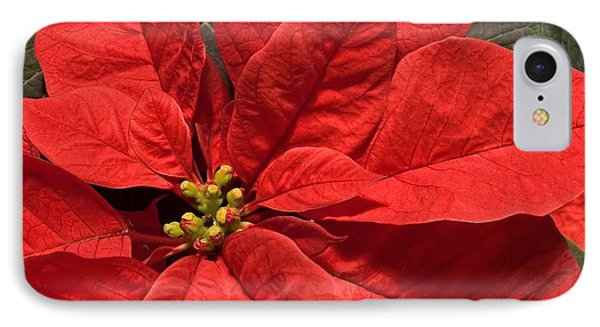Red Poinsettia Plant For Christmas IPhone Case by Jane McIlroy