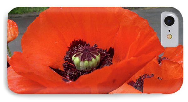 Red Poppy IPhone Case by Barbara Griffin