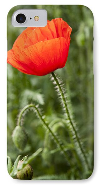 Red Poppy IPhone Case by David Isaacson