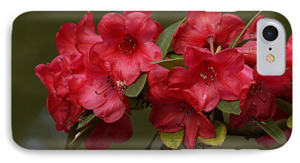 IPhone Case featuring the photograph Red Rhododendron by Inge Riis McDonald