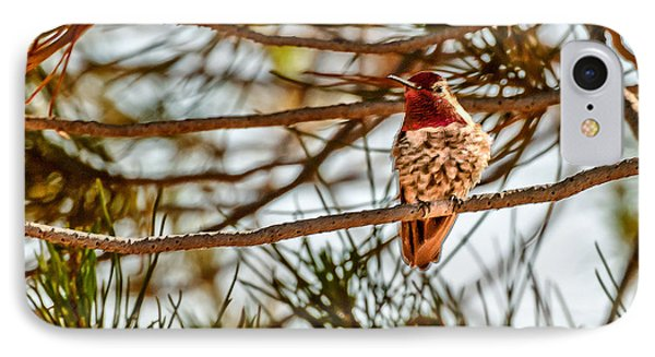 Red Rock Country Hummingbird Phone Case by Bob and Nadine Johnston