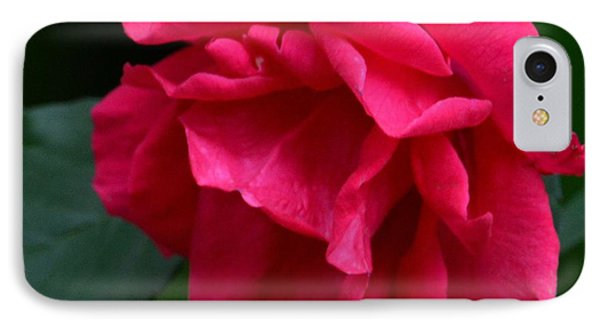 Red Rose 2013 IPhone Case by Maria Urso