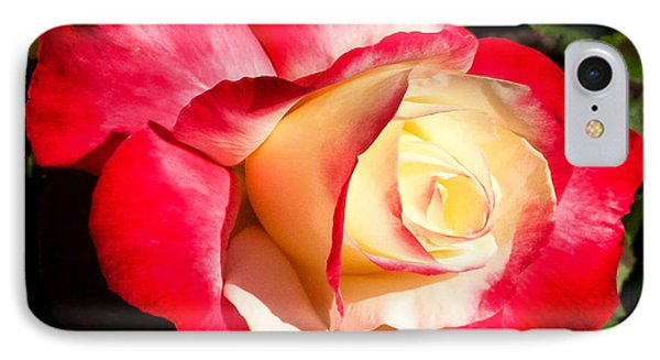 Red Rose IPhone Case by Margaret Buchanan