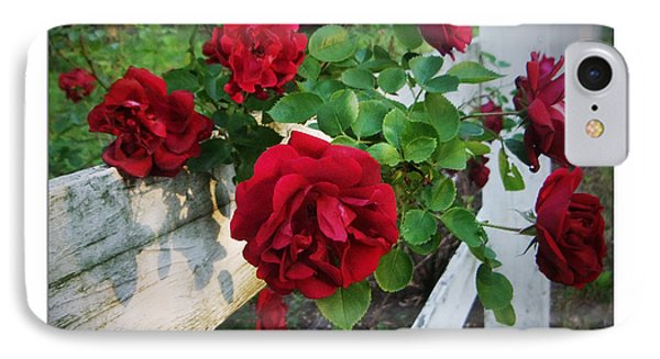 Red Roses - White Fence Phone Case by Brian Wallace