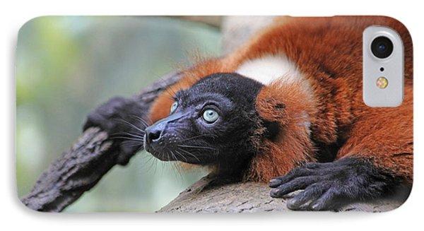 Red-ruffed Lemur Phone Case by Karol Livote