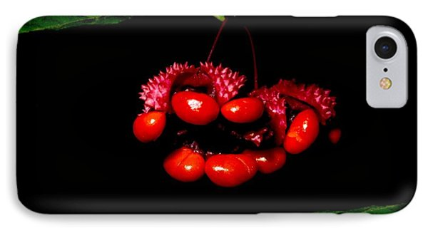 Red Seedpod IPhone Case