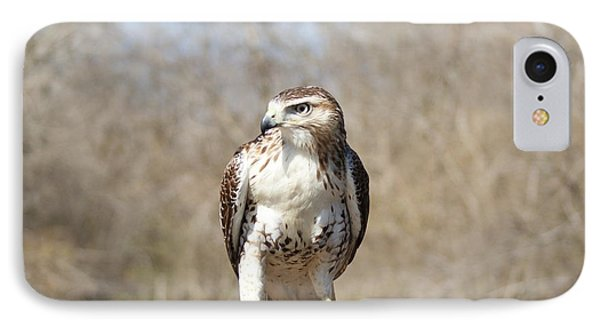 Red Shoulder Hawk IPhone Case by Rick Friedle