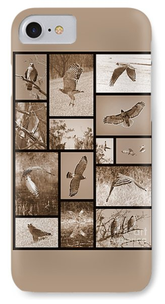 Red-shouldered Hawk Collage IPhone Case by Carol Groenen