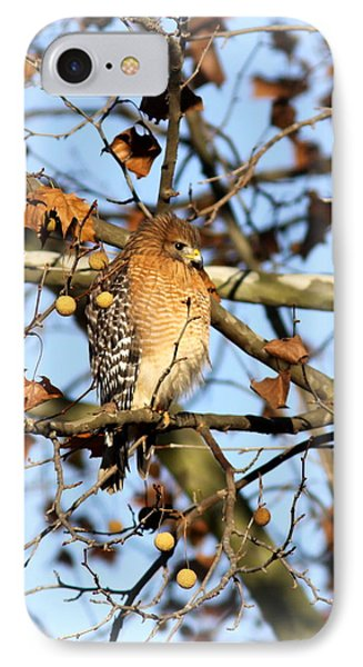 Red-shouldered Hawk - Img_7943 IPhone Case