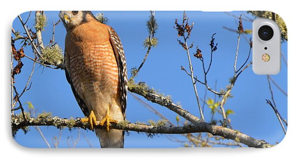 Red Shouldered Hawk Phone Case by Jodi Terracina