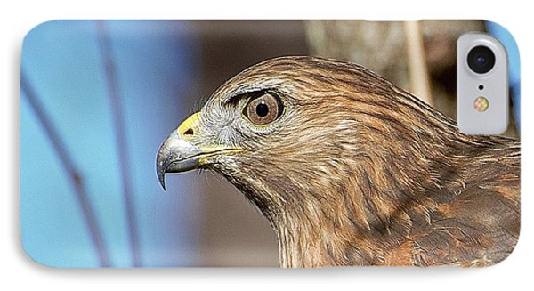 Red-shouldered Hawk IPhone Case by Ludwig Keck