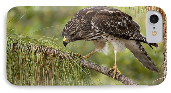 Red Shouldered Hawk Photo IPhone Case by Meg Rousher