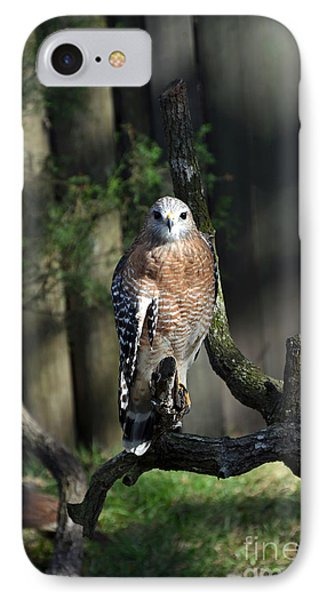 Red Shouldered-hawk IPhone Case by Robert Meanor