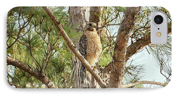 IPhone Case featuring the photograph Red-shouldered Hawk by Zoe Ferrie